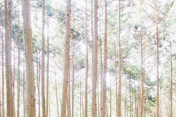 えひめの森と暮らす リトルブランチ